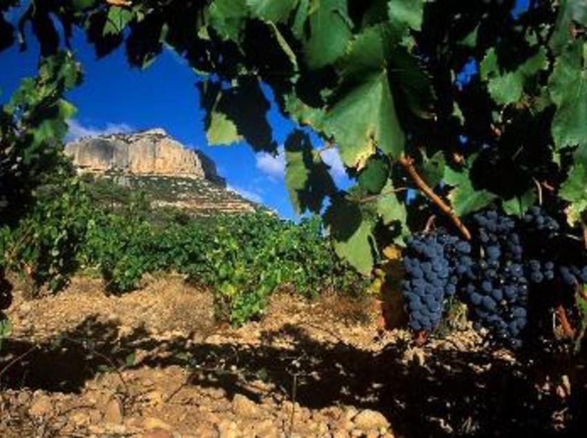 Quan arribes al Priorat, les vinyes t'acompanyen en la teva ruta. (Oficina de turisme de Mont-roig del Camp)
