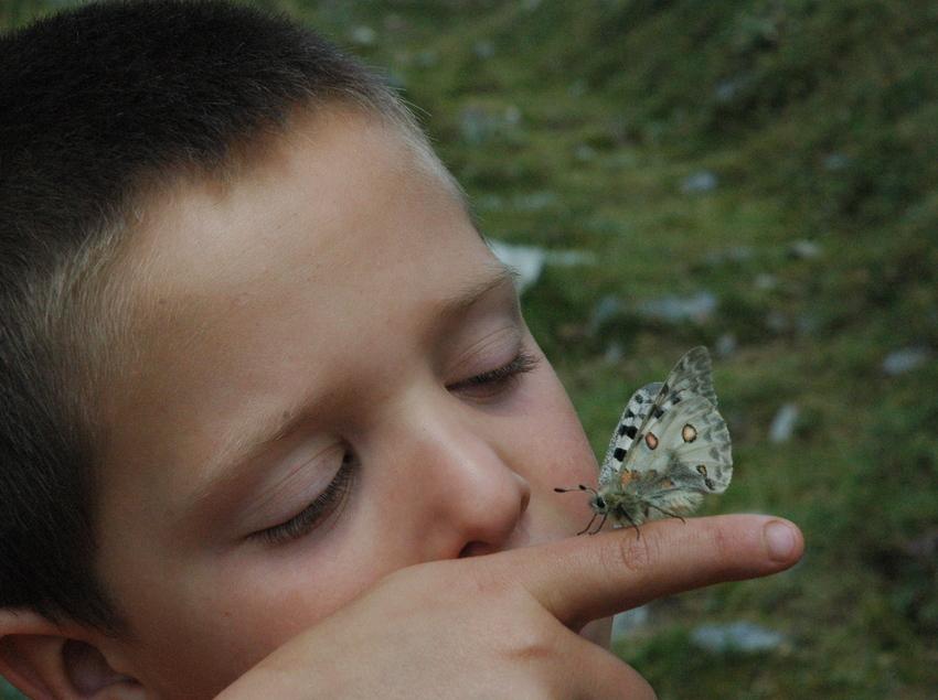 Descobreix el món de la papallona. (Obaga , La Guingueta d'Àneu. © F.Rodríguez)