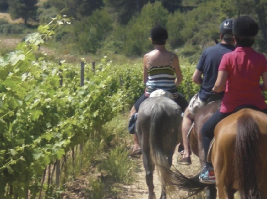 Un passeig a cavall entre vinyes