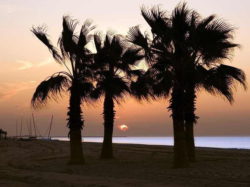 Costa mediterránea con palmeras   (Le Méridien Ra Beach Hotel & Spa)
