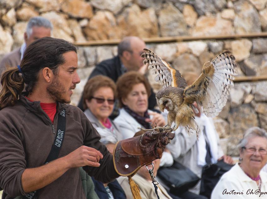 Exhibición de vuelo de aves rapaces     (Antoni Chaparro)