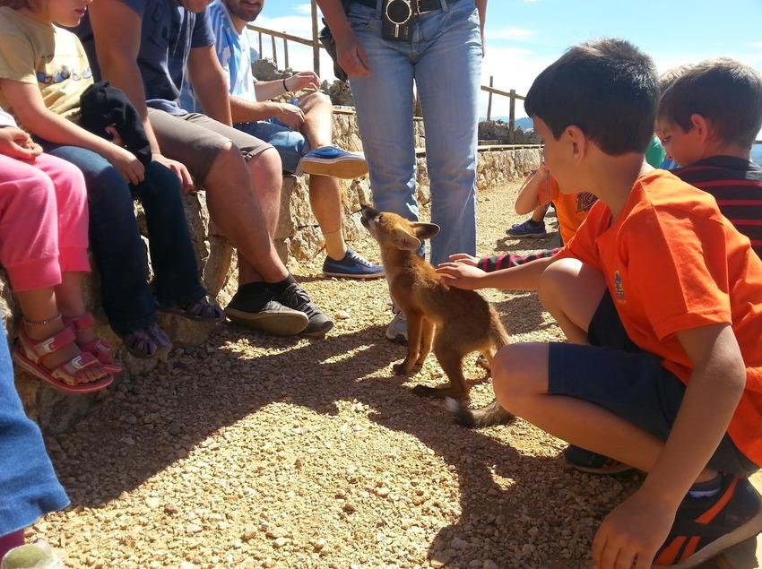Niños acariciando un pequeño zorro     (Zoo del Pirineu)