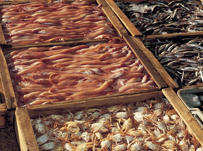 Cajas de pescado en la cofradía de pescadores de Sant Carles de la Ràpita.