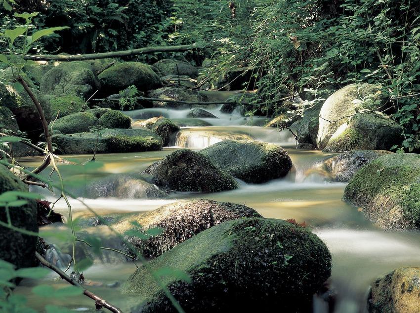 Riera en el macizo del Montseny.  (J. Moragues)