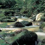 Riera al massís del Montseny  (J. Moragues)