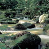 Riera en el macizo del Montseny.