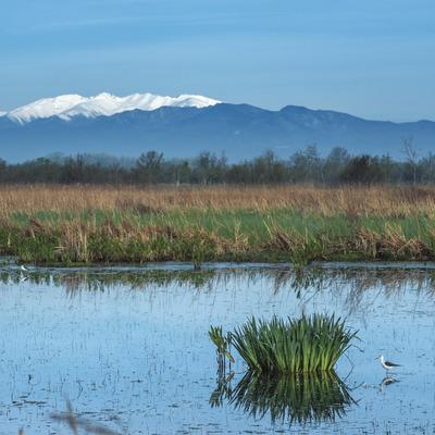 Parque Natural de los humedales del Empordà     (@ Departament de Presidència de la Generalitat de Catalunya)