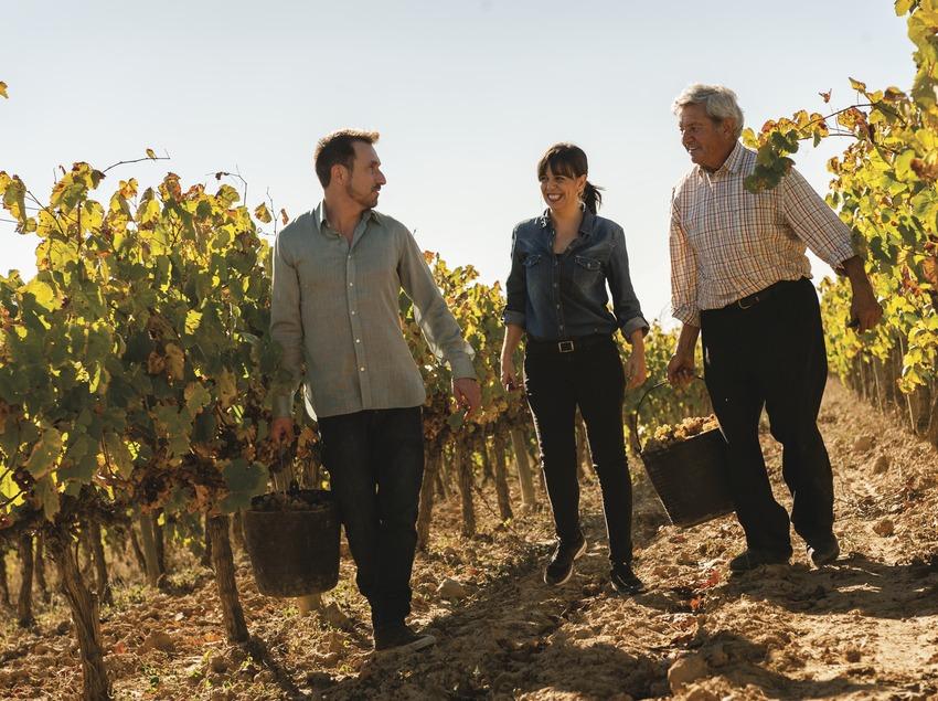 Caves Castellroig. Taller de verema amb parella i guia recollint raïm de les vinyes.