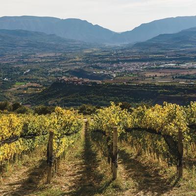 Castell d'Encús. Vinyes d'alta muntanya amb Talarn, Tremp i la serra del Montsec de fons.
