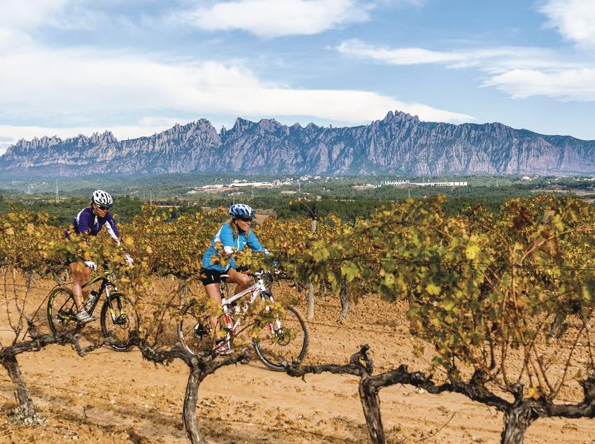 Can Bonastre. Ciclistas MTB entre viñas y Monserrat de fondo.