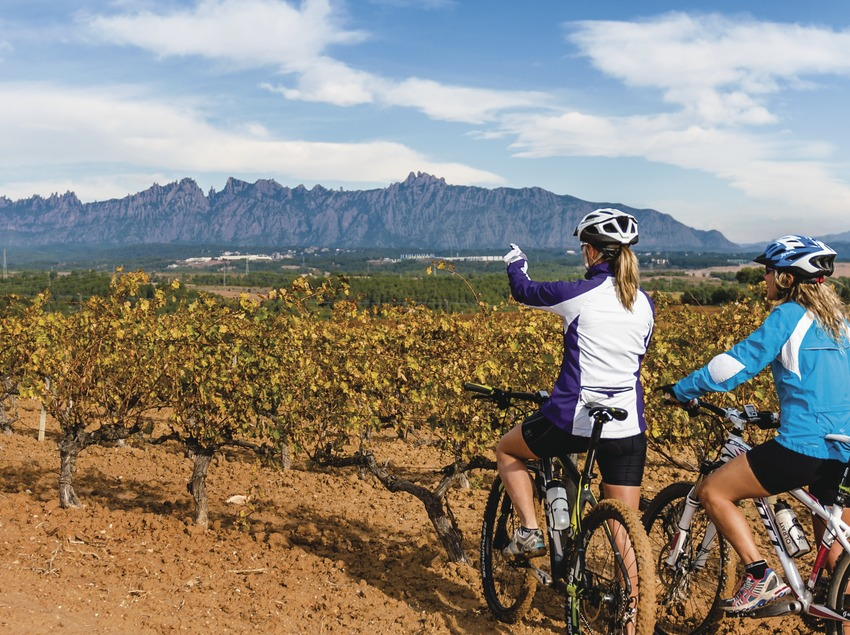 Can Bonastre. Ciclistes MTB entre vinyes amb Montserrat de fons.