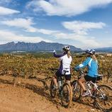 Can Bonastre. Ciclistes MTB entre vinyes amb Montserrat de fons. (Marc Castellet)