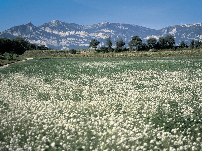 Weiden in der Nähe von Avià, die Sierra de la Llosa im Hintergrund  (Servicios Editorials Georama)