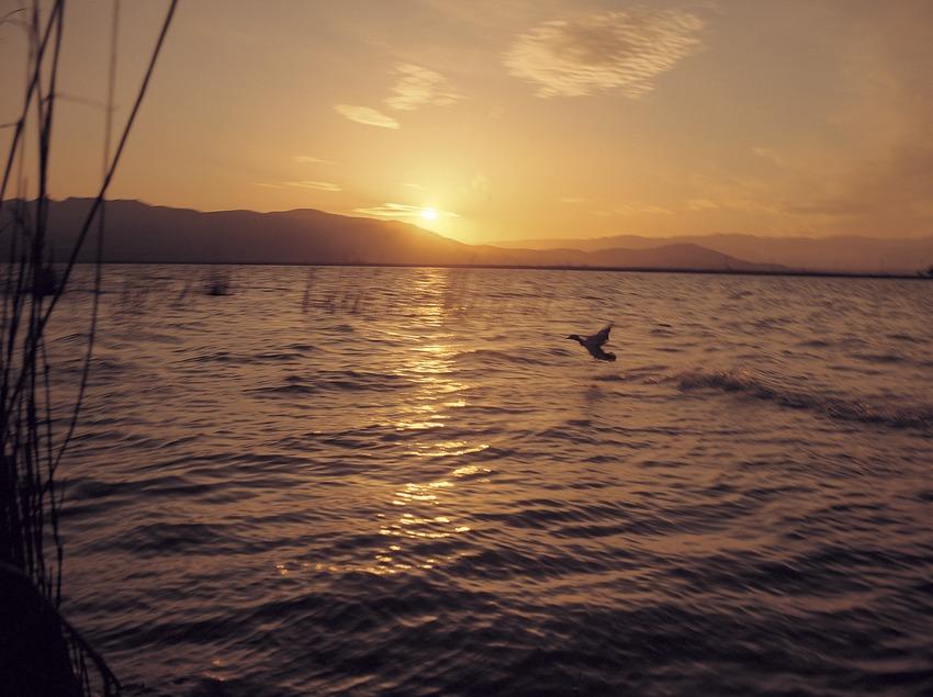 Puesta de sol en el Parque Natural del Delta del Ebro  (Bedmar)