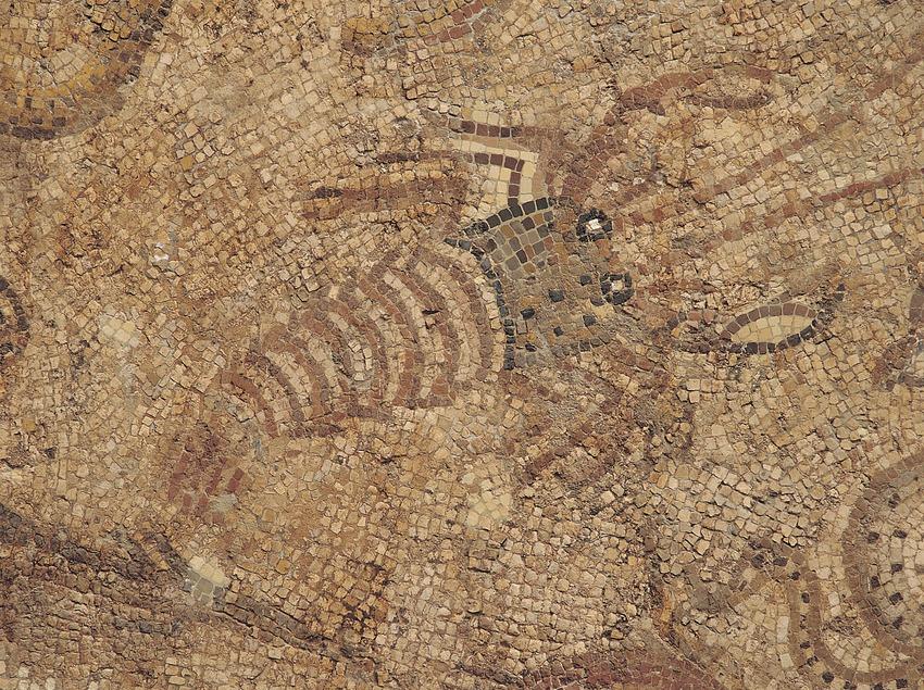 Detall del mosaic dels peixos. Museu Nacional Arqueològic de Tarragona.  (Jordi Pareto)
