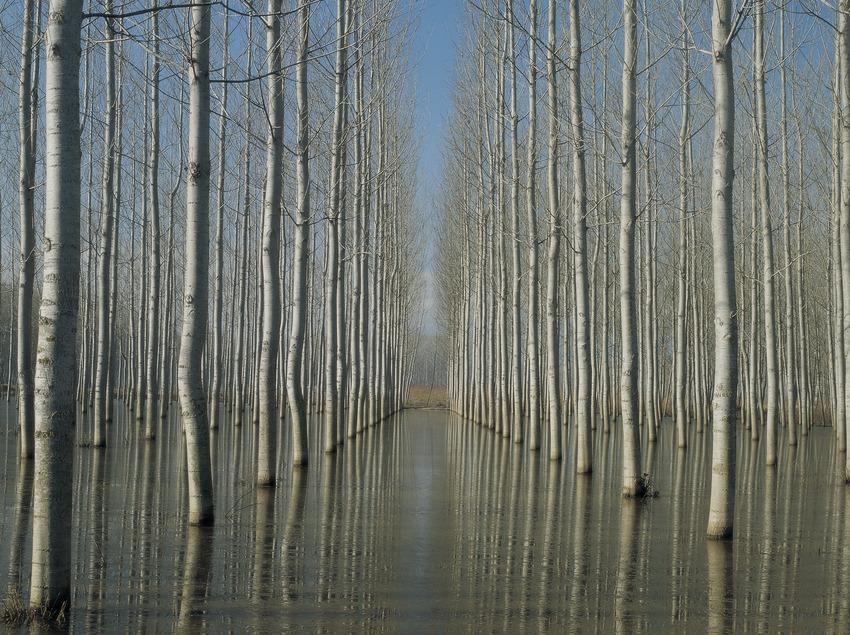 Lago de Sils  (Kim Castells)