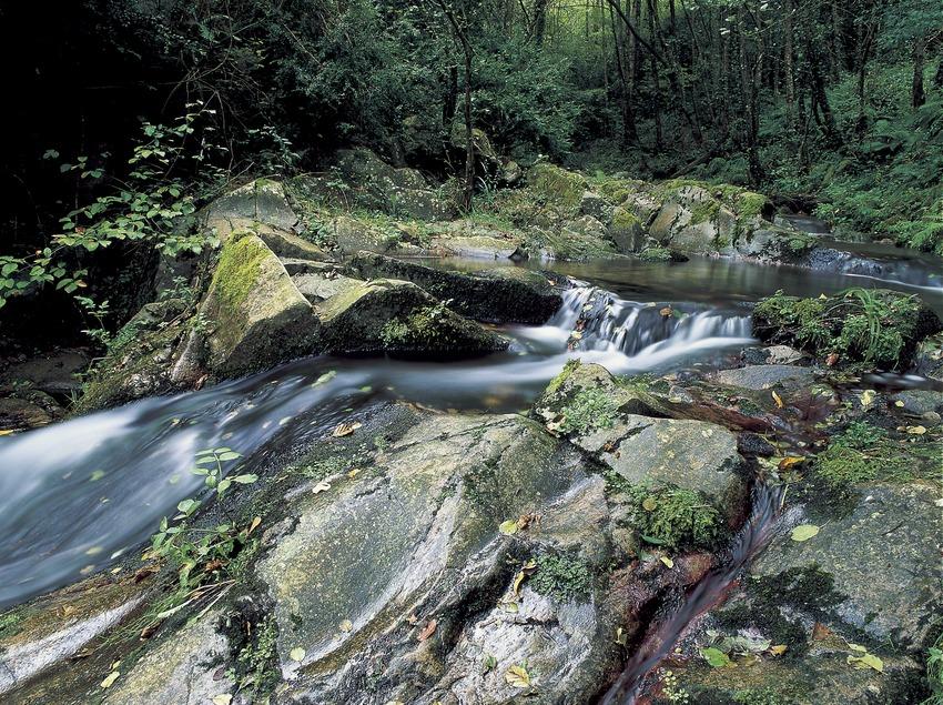 Ruisseau près de Susqueda.