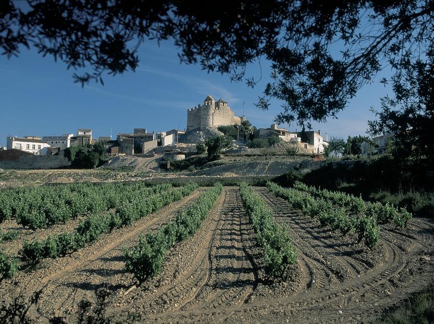 Viñedos cerca de Calafell, con el castillo y la ermita de Santa Creu al fondo.