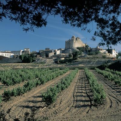 Vinyes prop de Calafell, amb el castell i ermita de Santa Creu al fons.