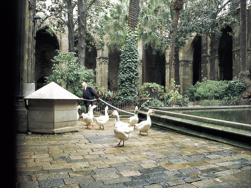 Ocas en el claustro de la catedral.  (Imagen M.A.S.)