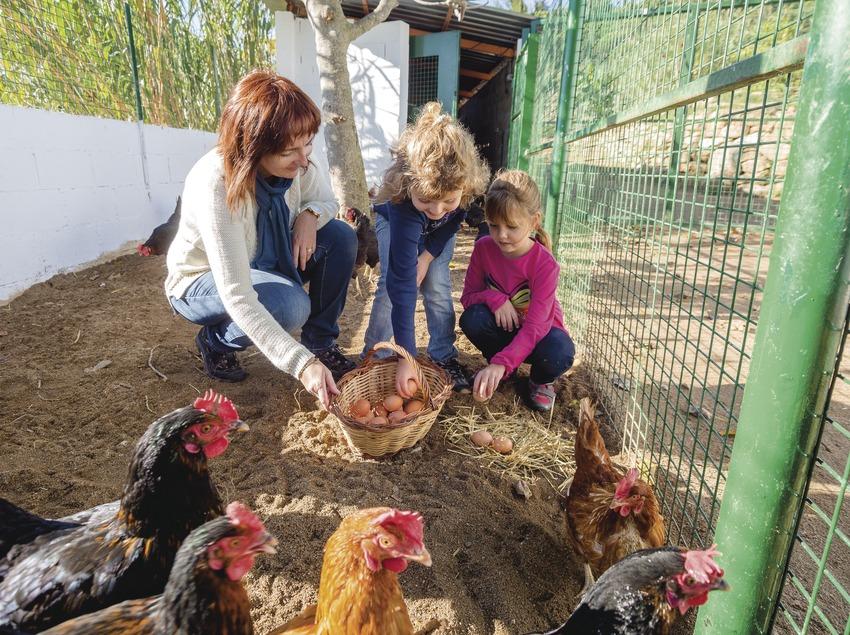 família agafant ous a la granja de la Fundació Marpi.