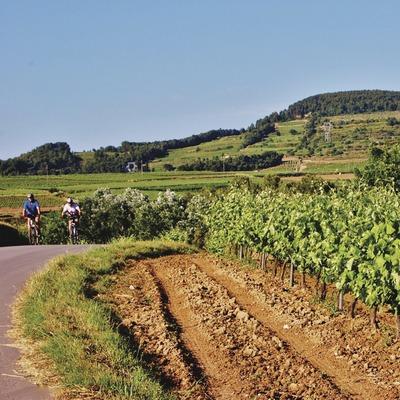 Ciclisme entre vinyes. (Maria Rosa Ferré)