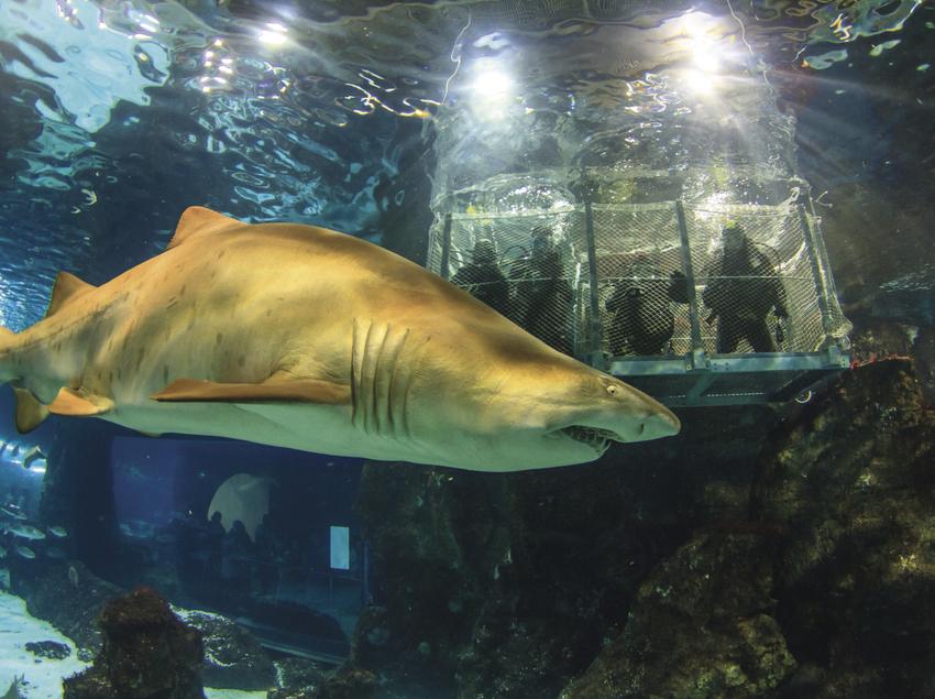 Tiburón, Aquàrium de Barcelona.