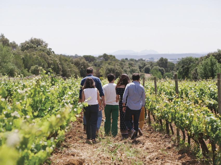 Visita guiada entre de las viñas del Mas Oller.