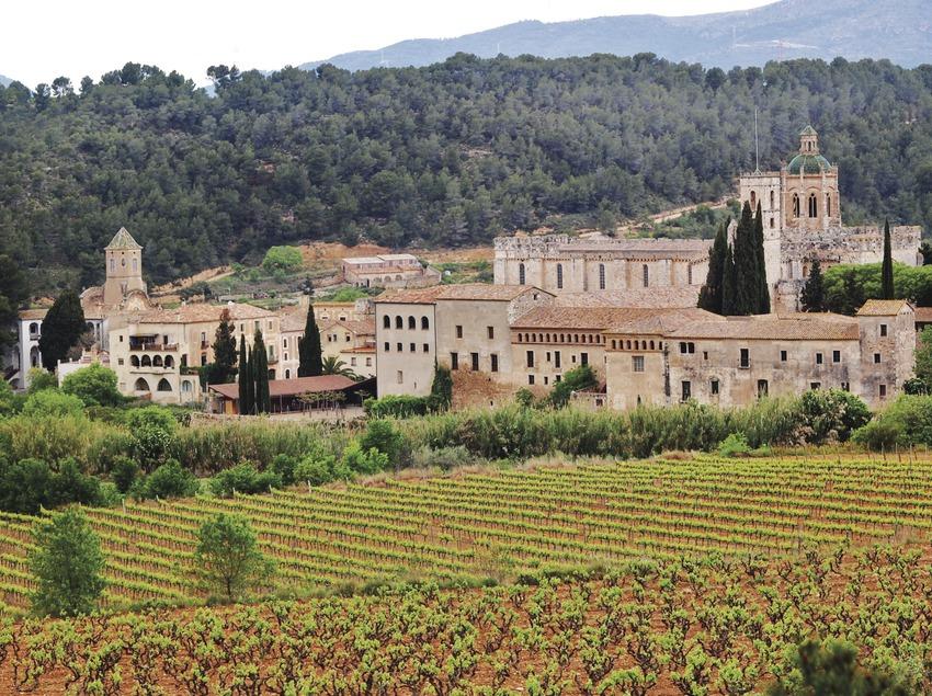 Vinyes al peu del Monestir.