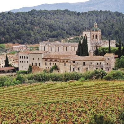 Vinyes al peu del Monestir. (Maria Rosa Ferré)