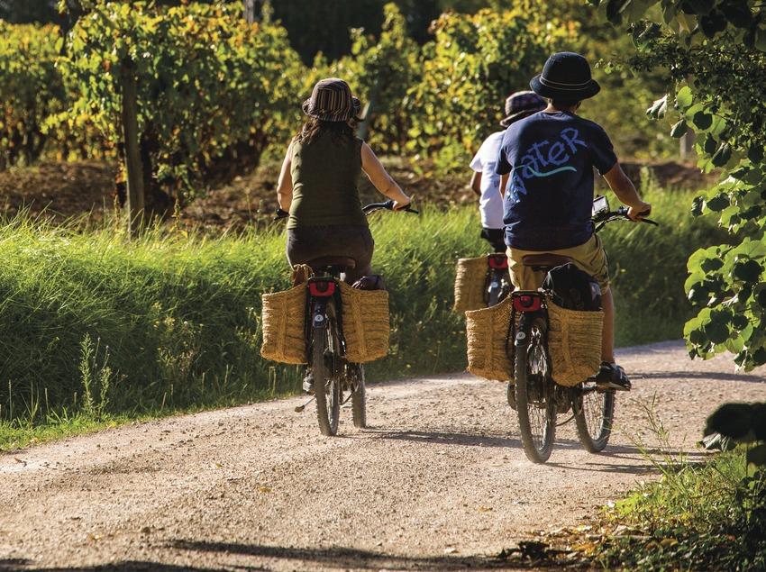 Paseo en burricleta por las viñas. (Consuelo Bautista)