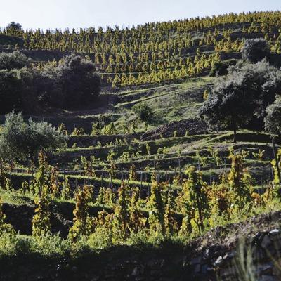 Vinyes de Torroja. (Maria Rosa Ferré)