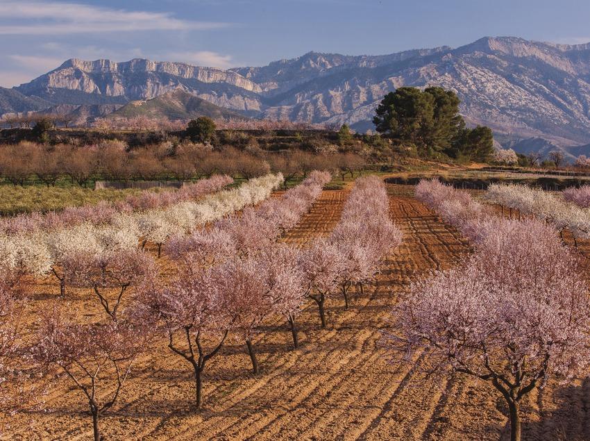 Conrreus de secà a la Terra Alta. (Mariano Cebolla)