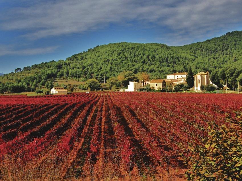 La vinya vermella d'Aiguaviva. (Maria Rosa Ferré)