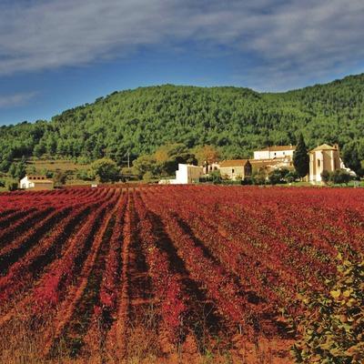 La vinya vermella d'Aiguaviva.