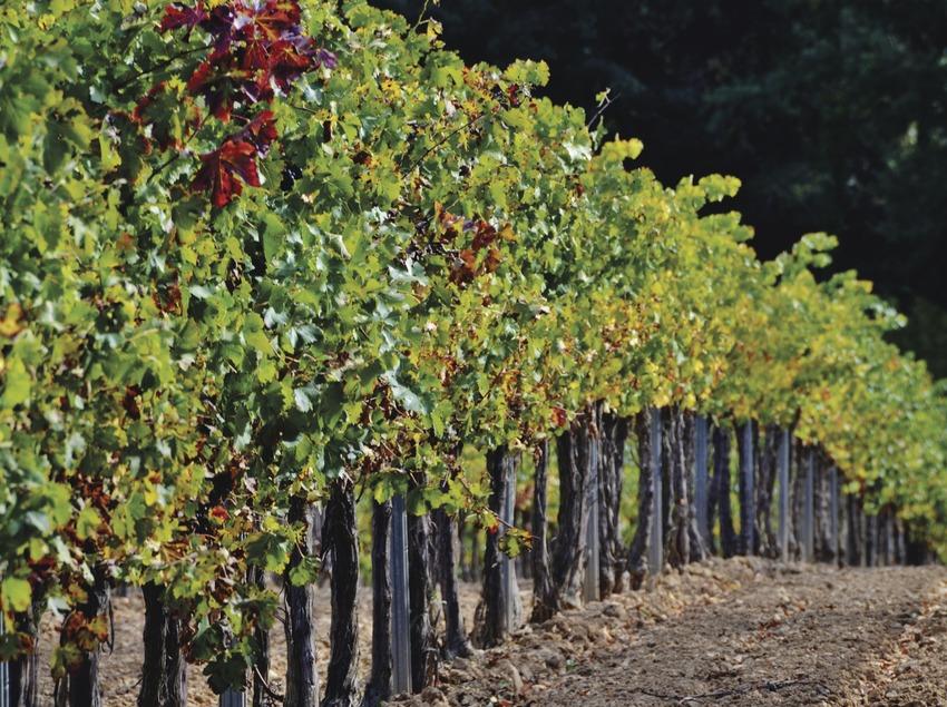 Vinya de Tardor.