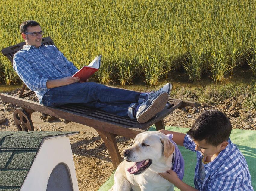 Pare, fill i gos jugant devant dels arrossals del Delta de l'Ebre. (Mariano Cebolla)