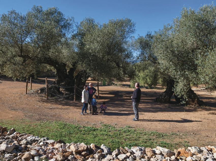 Una família rep les explicacions del guia al Museu Naturtal de les Oliveres mil·lenàries. (Dani Codina)