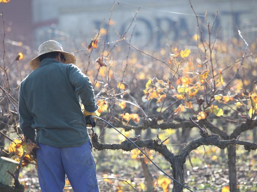 Caves Llopart, treballador a la vinya.   (Caves Llopart)