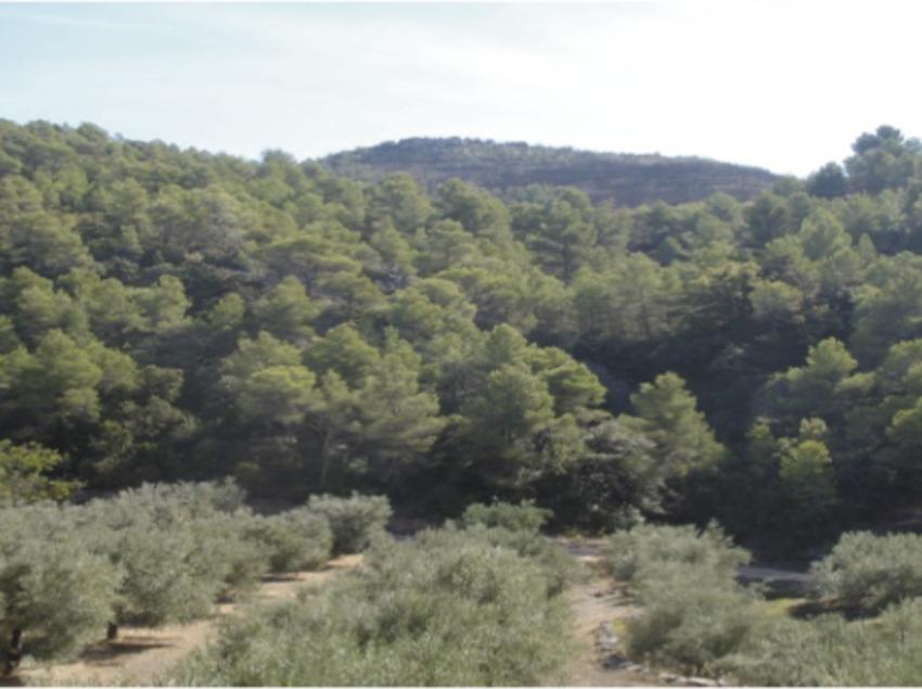 Olivarera Sant Julià de Cubells