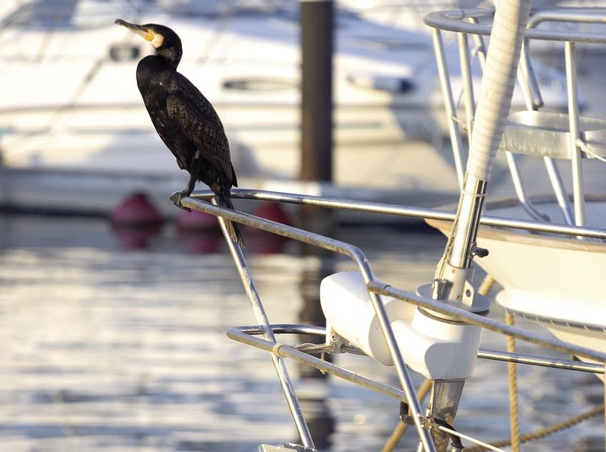 Ave sobre un yate anclado en el puerto.  (Miguel Angel Alvarez)