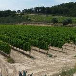 Celler entre vinyes - ruta enoturística