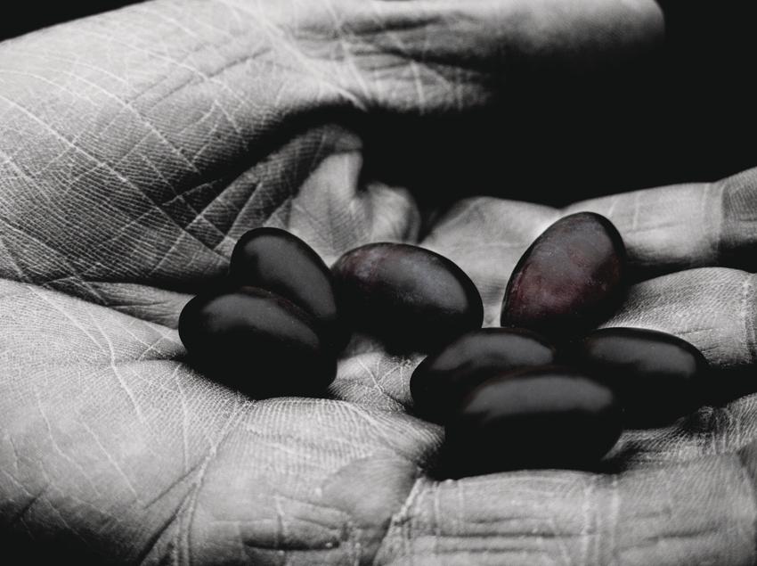 Identitat Extra Virgin Oil, les nostres olives.