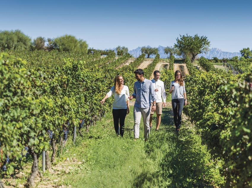 Walking trough the vineyards Torres  (Torres)
