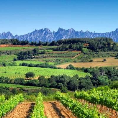 Cata de vinos y cava catalanes en la bodega Cuscó Berga
