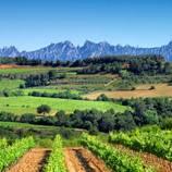 Cata de vins i cava catalans al celler Cuscó Berga