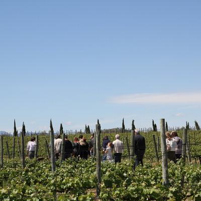 Grup de persones caminant per una vinya.