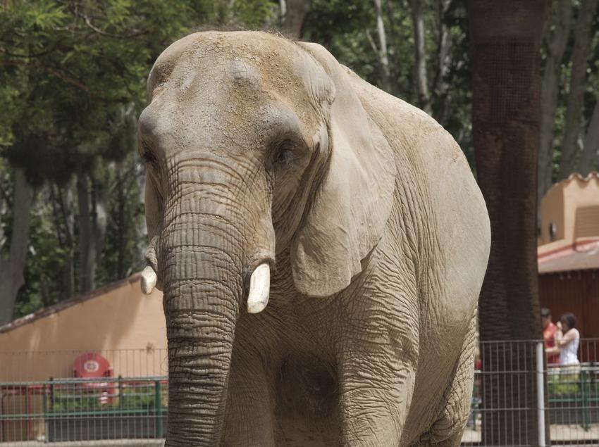 Elefante en el parque zoológico.  (Nano Cañas)