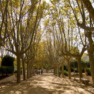 Parc Dalmau de Calella (Ajuntament de Calella)