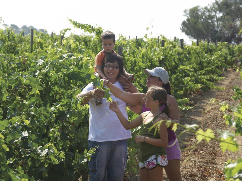 Dona i nens en una vinya del municipi de Calonge (Ajuntament de Calonge)